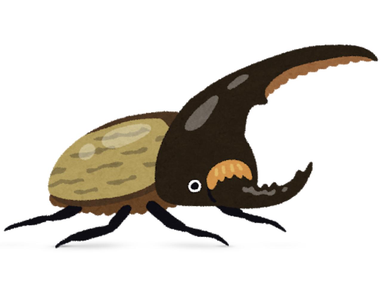 ヘラクレスオオカブト虫の話